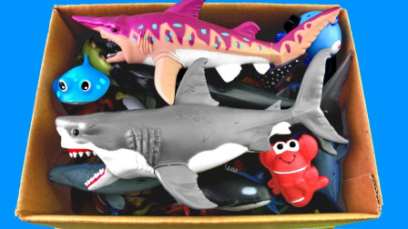 越看越有趣!这么多动物有哪些是生活在深海里呢?趣味玩具故事