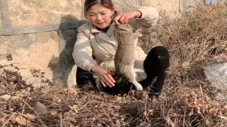 农村小媳妇今天运气真不错,赶集回来在路上捡了一窝兔子,羡慕啊!