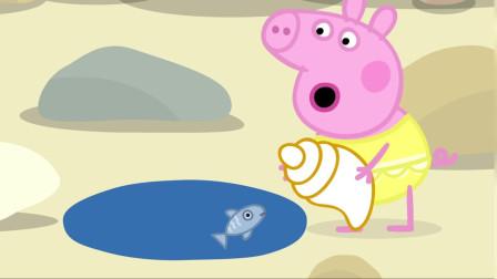 小猪佩奇全集:佩奇捡到了一个大大的贝壳!