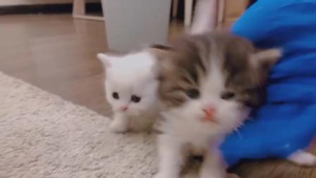 现在撸猫都这么讲究了嘛?还带着手套
