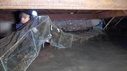 地笼在涵管洞里放了5天,大叔拉起来一看高兴坏了,几百条鱼