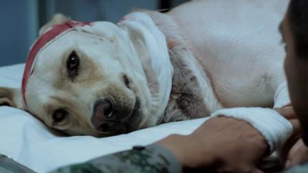 神犬奇兵:老谢帮小米擦着身子,回忆着他们的过去,忍不住的掉泪