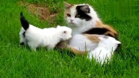 母猫带小奶猫出来透气,猫咪还是带花的好
