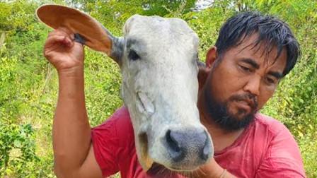 20斤重的牛头,农村大叔一个人烤着吃,蘸上辣椒酱就更加美味了