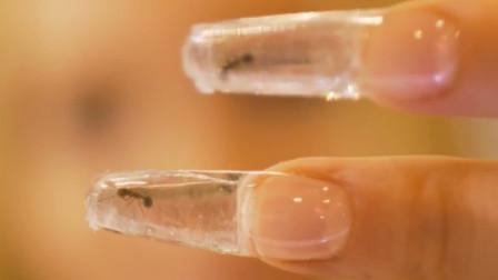 俄罗斯美甲师脑洞大开,用活蚂蚁来美甲,让蚂蚁在指甲里爬来爬去!