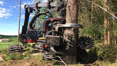 """德国""""最强""""伐木机,6分钟轻松锯树100棵!耗资3200万天价"""