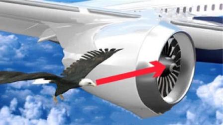 """飞机速度480km/h情况下,撞到鸟会怎样?这鸟是""""炮弹""""做的吗"""