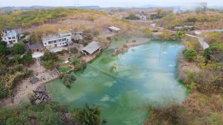 广西玉林农村小伙回老家20亩土地搞养殖,看看他是怎么规划的,这样合理吗