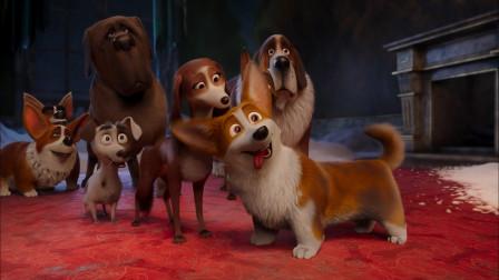 """女王的柯基:狗狗们为了争宠,上演""""宫心计"""",甚至想害对方!"""