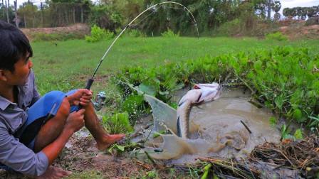 水草坑里拔开个口,小哥往里抛几竿,哇大鱼连连上钩,太过瘾了