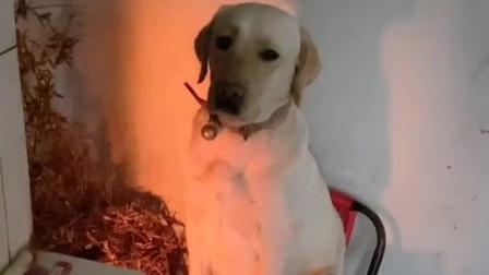 天气一冷狗狗就把烧火的位置给霸占了,一下午没有挪摊儿