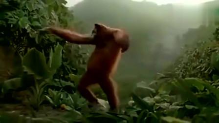 猩猩妩媚动人风情万种的舞姿看完都要笑了.