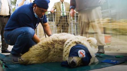 一名普通的兽医,冲入战乱地区救助野生动物