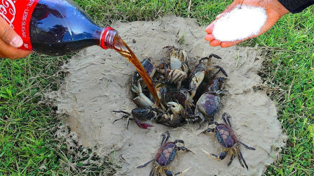 """小伙将可乐和盐倒进一口地洞中,10秒后,一个""""小家伙""""探出了头!"""
