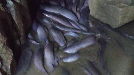 塘角鱼据说只有广西人才吃