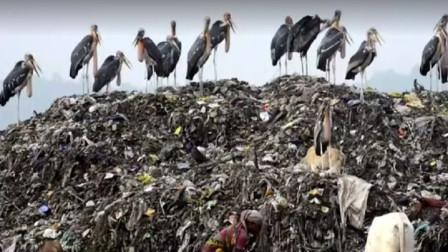 印度最大的垃圾场,这里的鸟比人还大,孩子从出生就跟垃圾打交道