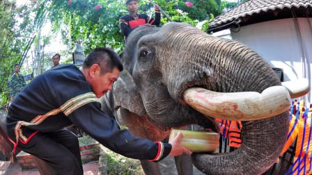 """饲养员为什么会残忍割下大象的牙齿?专家道出真相:为了""""保命"""""""