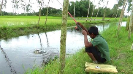 农村男孩在家闲不住,去田边钓几竿,看看他钓了多少?
