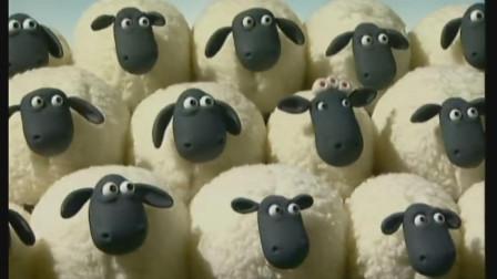 小羊肖恩:蜜蜂又飞回来了,小羊吓得瑟瑟发抖,把头埋起来