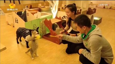 萌宠天地之萌猫咖啡屋,吃着甜品撸着猫,美滋滋!