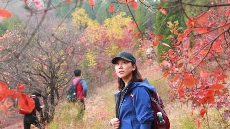 《徒步山东》济南区(8)红叶谷外围赏红叶U型穿越19.11.3
