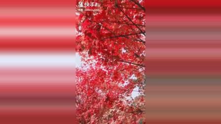北京香山一日游 看漫山红叶赏深秋美景