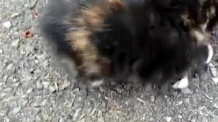 石头缝里发现一只小奶猫,不过没有看到猫妈妈