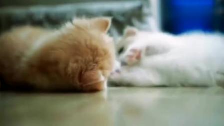 我家的两只小萌猫,真希望它们不要长大