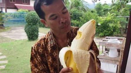 """世界上""""最大""""的香蕉树,直径达到2米!香蕉比胳膊还粗!"""