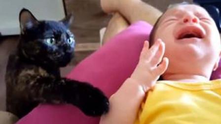 宝宝睡觉突然大哭起来,下一秒小猫的举动,我看一次笑一次!