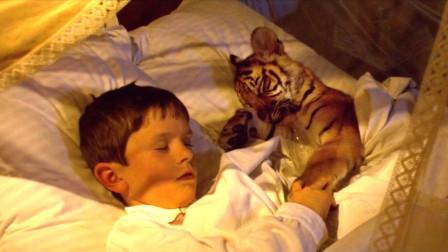 男孩养老虎当宠物,每天抱着睡,直到它咬死了家里的宠物狗!