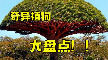 盘点全球4大奇异植物:能诱捕小羊羔的食羊树,身价不凡的龙血树