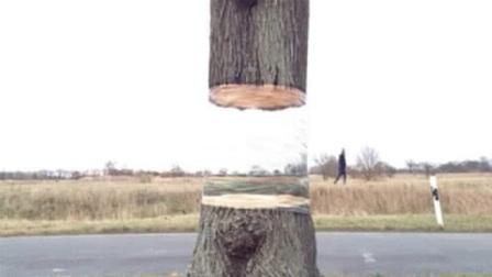 野外发现一棵悬空断木,走近一看吓一跳,完全被自己的眼睛欺骗了