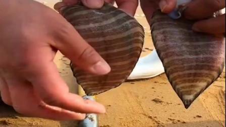 """赶海遇见了""""花舌头鱼"""",十分罕见的一种鱼类,简直太神奇了!"""