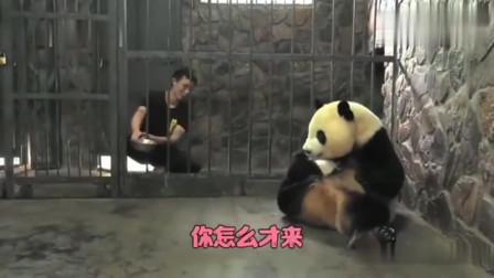 熊猫:饲养员,我的忘崽牛奶怎么还没送来呀