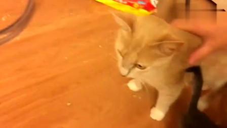 自从母猫生了小猫咪,家里从来就没干净过