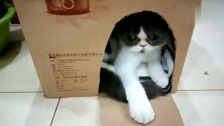 主人用纸盒帮猫咪做了一个小房子,猫咪好喜欢,呆在里面不愿出来