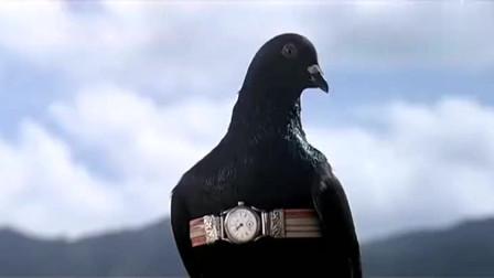 中华战士:男子:鸽子啊!没有手还带什么手表!这下好了被烤了吧