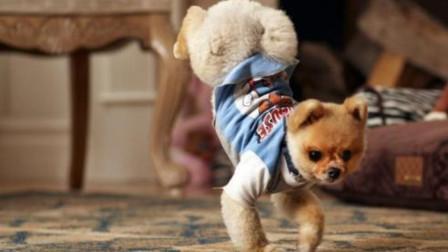 村里唯一去过夜店的狗,当音乐响起时,狗子身体上下摆动十分劲爆
