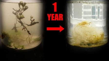 把海水密封1年会发生什么?老外亲测,结果大开眼界