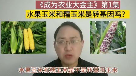 第1集 水果玉米和糯玉米是转基因吗?