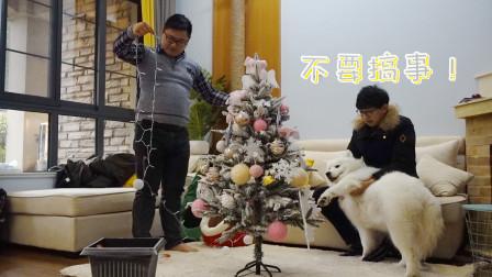 铲屎官布置圣诞树萨摩耶来帮忙,没想被主人用彩灯捆成了雪橇狗!