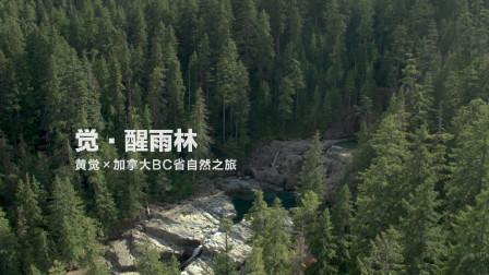黄觉 × 加拿大BC省自然之旅——雨林