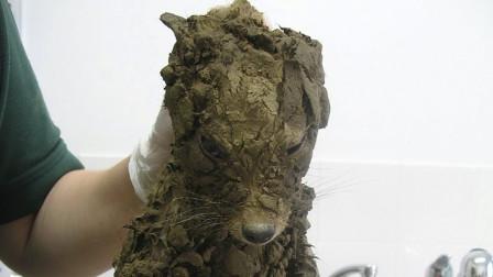 """小姑娘在坭坑里,拯救了一只""""狗狗"""",等她洗干净后才发现是个活宝"""