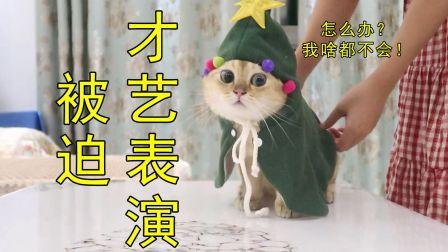 家里猫被打扮成圣诞树,猫:我亮了,漏电那种