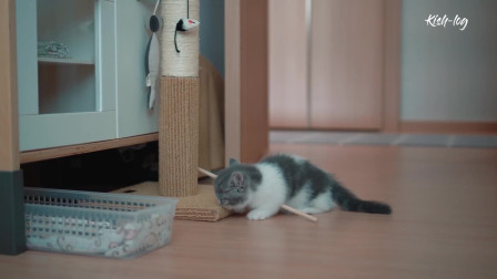 流浪猫身手这么好,其实也是被逼的