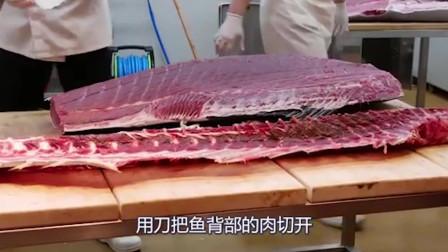 韩国大厨处理金枪鱼一斤就要600元吃的好过瘾