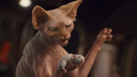 小猫咪被主人抛弃后,学人类养老鼠当宠物,一部搞笑动物电影