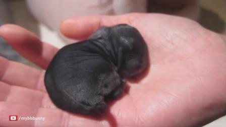 兔妈妈生了一窝小兔子,竟然整天守护小兔,兔妈妈的举动令人感动