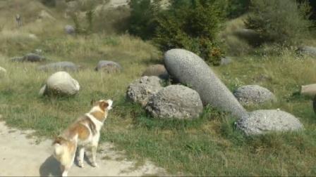小村莊出現奇怪石頭,喝水就長大還能自己動,專家解釋不了原因!